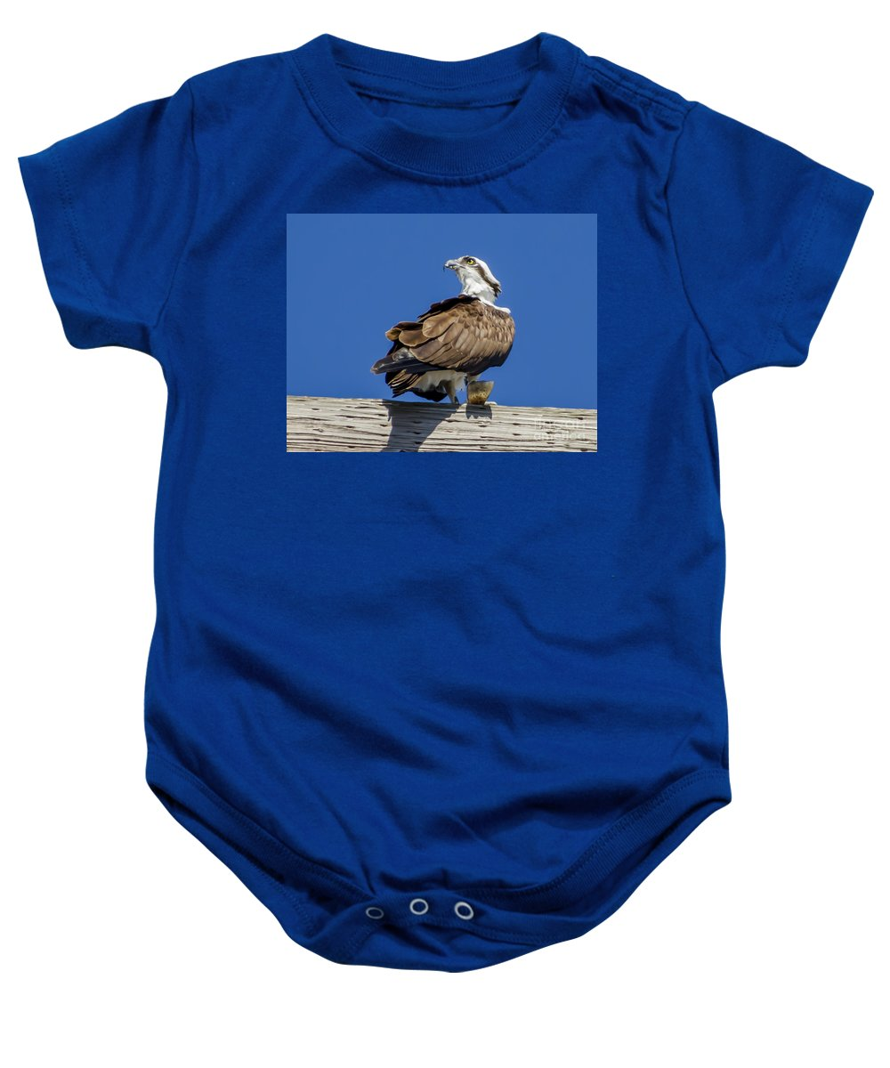 Osprey With Fish In Talons Baby Onesie featuring the photograph Osprey With Fish In Talons by Dale Powell