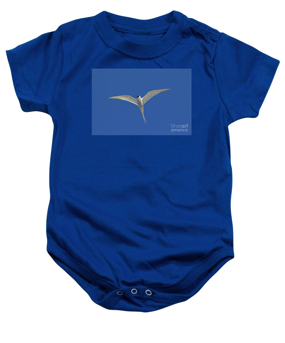 Arctic Tern Baby Onesie featuring the photograph 120206p270 by Arterra Picture Library