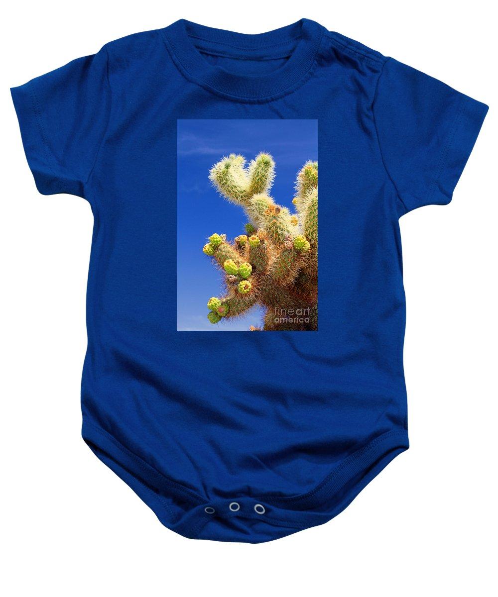 Cholla Cactus Baby Onesie featuring the photograph Cholla Cactus I By Diana Sainz by Diana Raquel Sainz