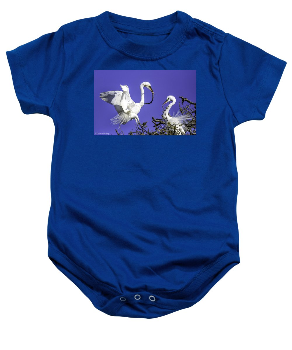 Egrets Baby Onesie featuring the photograph Great Egrets Nesting by Fran Gallogly