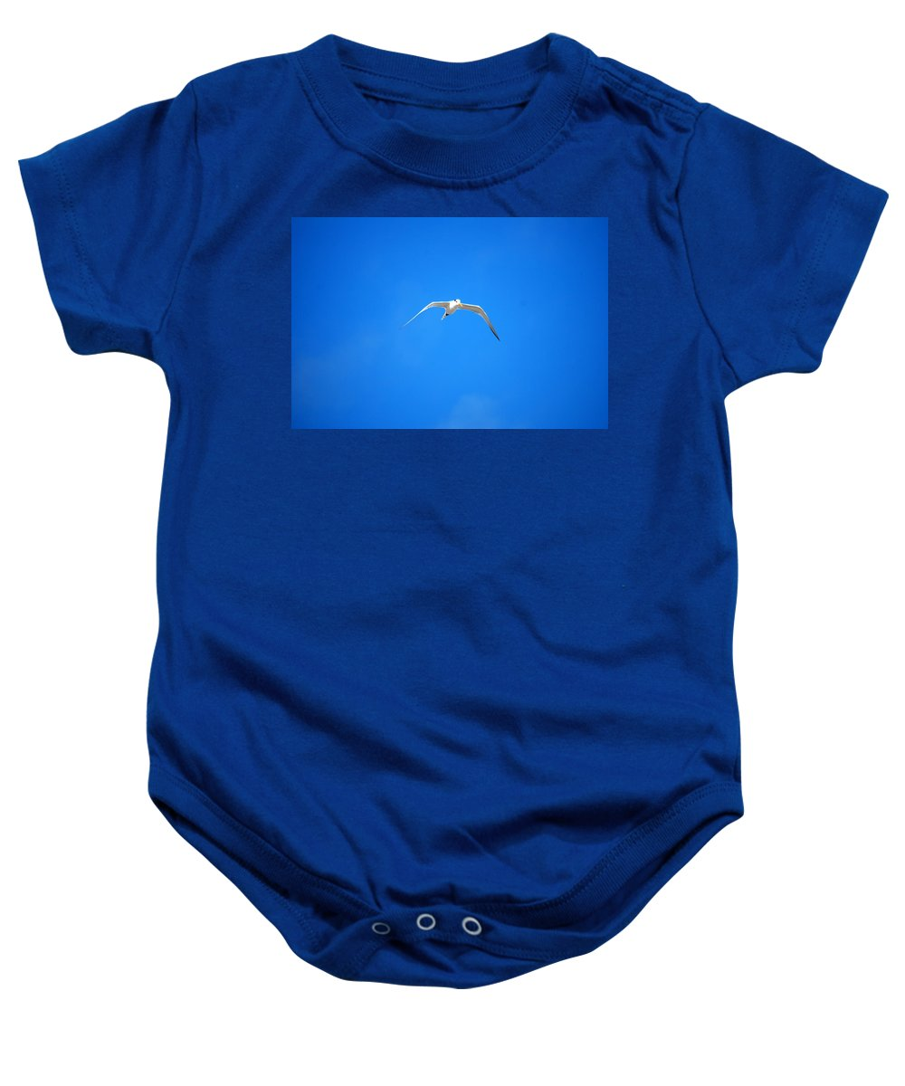 Gull Baby Onesie featuring the photograph Gull 001 by Larry Ward