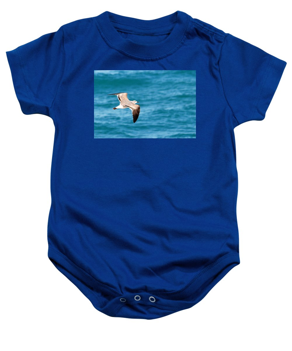 Laughing Gull Baby Onesie featuring the photograph Laughing Gull 003 by Larry Ward