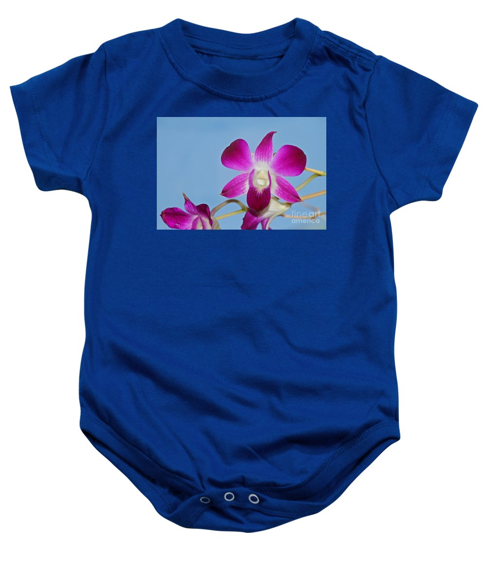 Orchid Baby Onesie featuring the photograph Orchids With Blue Sky by Karen Adams