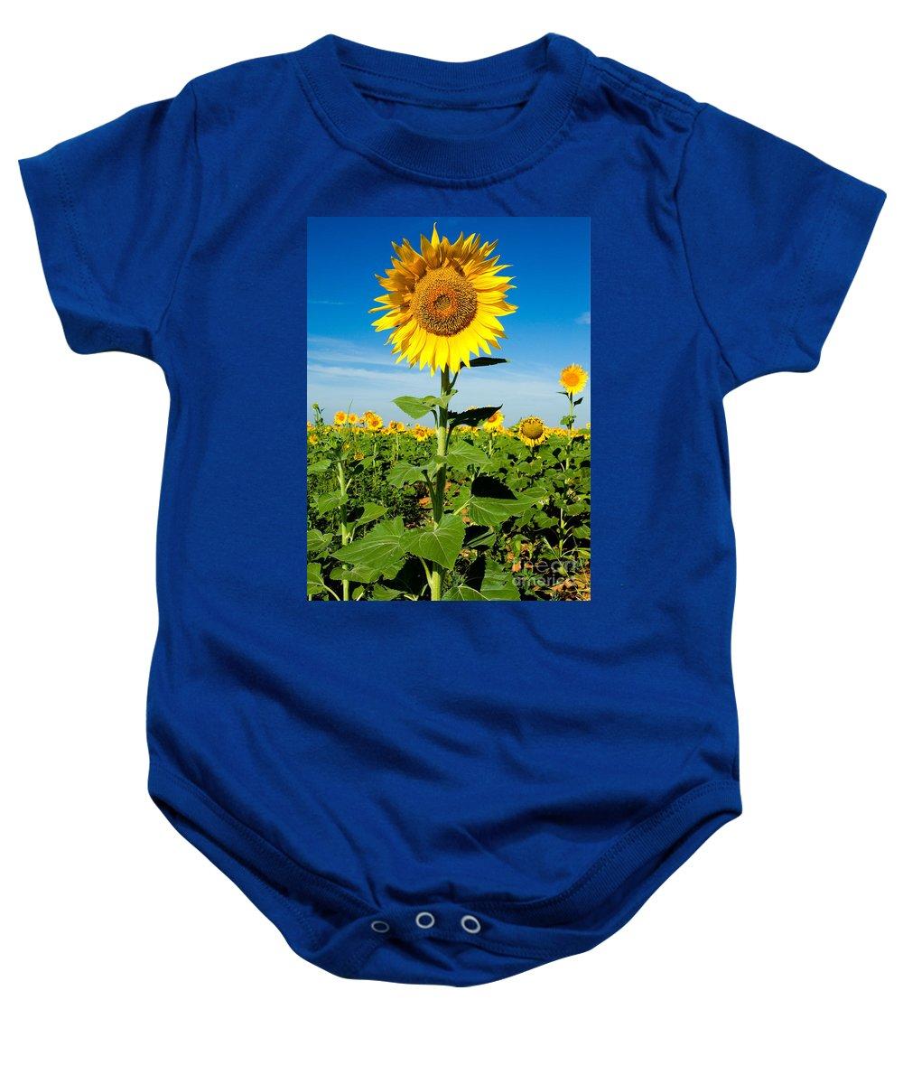 A Sunflower Photograph Baby Onesie featuring the photograph Sunflower by Mae Wertz
