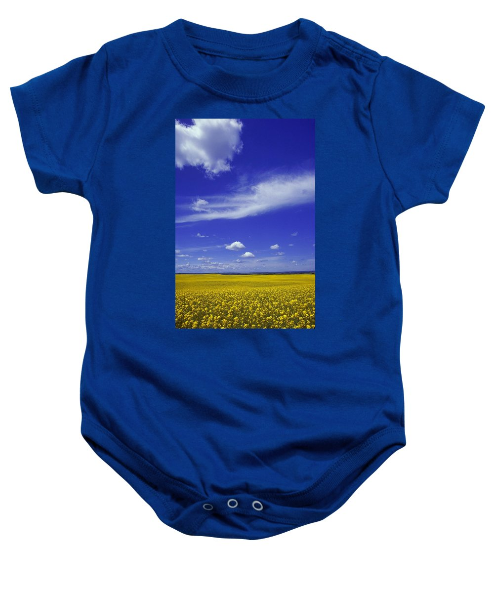 Agriculture Baby Onesie featuring the photograph Field Of Canola by Don Hammond