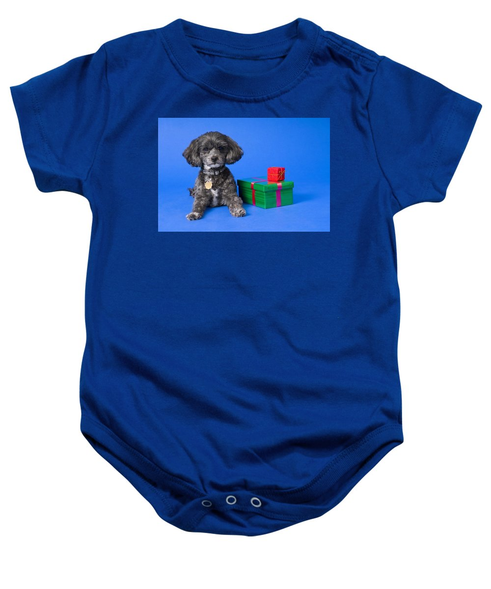 Animal Baby Onesie featuring the photograph A Dog With Some Gifts by Corey Hochachka