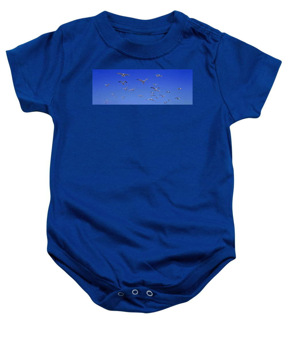 Horizontal Baby Onesie featuring the photograph A Group Of Birds by Don Hammond