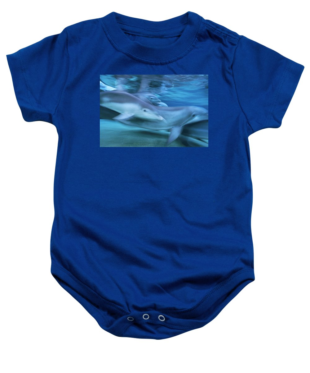 00125754 Baby Onesie featuring the photograph Bottlenose Dolphins Swimming Hawaii by Flip Nicklin