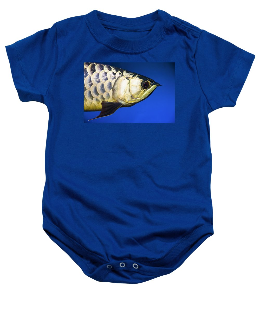 Animals Baby Onesie featuring the photograph Closeup Of A Fish by Steve Nagy