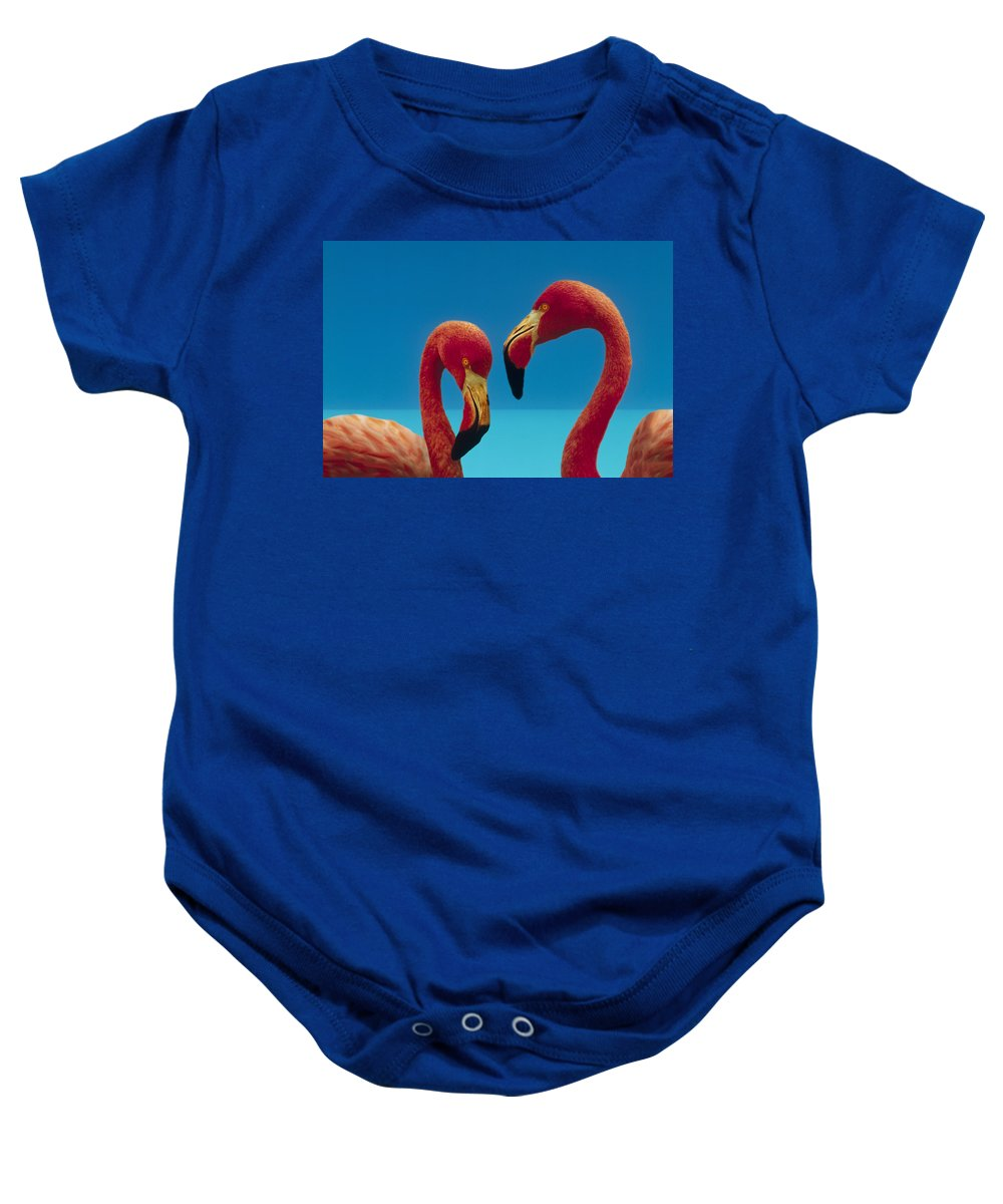 00172310 Baby Onesie featuring the photograph Greater Flamingo Courting Pair by Tim Fitzharris