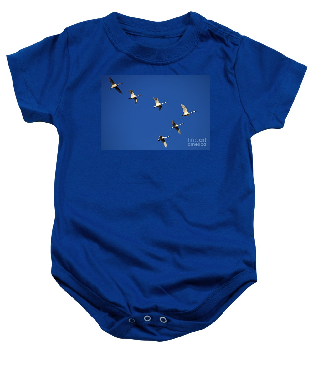 Tundra Swan Baby Onesie featuring the photograph In Formation by Mike Dawson