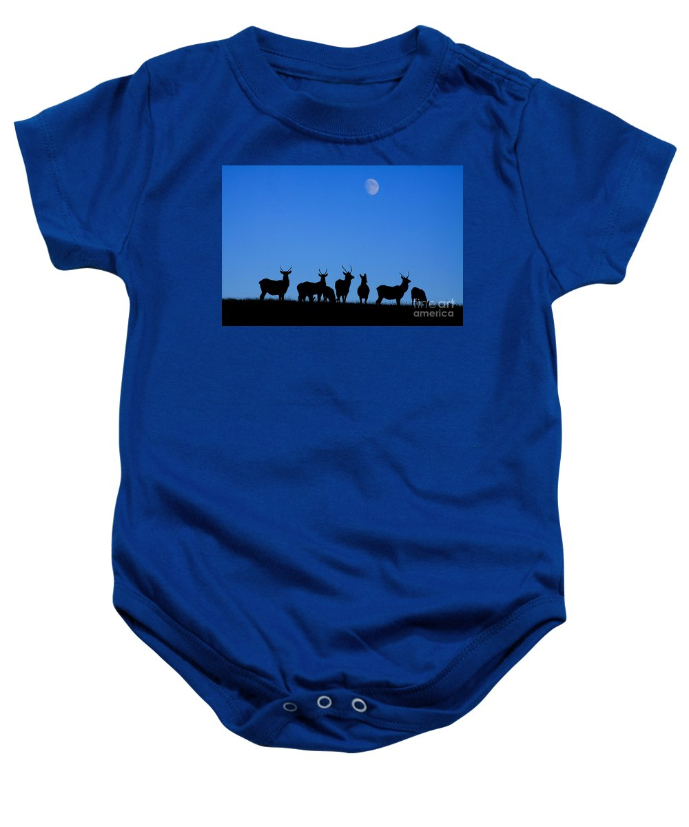 Elk Baby Onesie featuring the photograph Moonlighting by Alyce Taylor