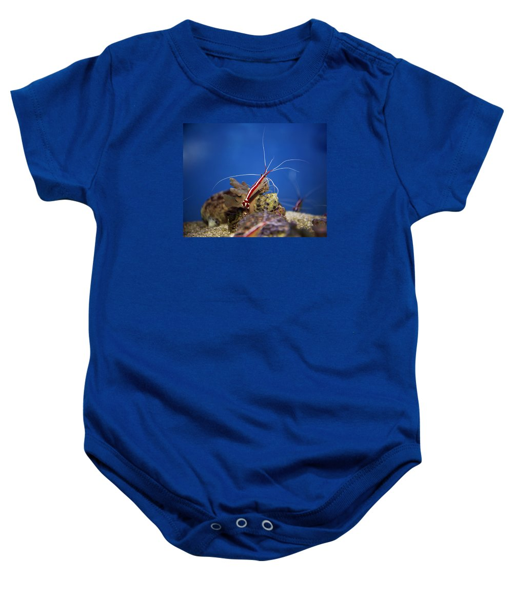 Red Baby Onesie featuring the photograph Red Shrimp by Elaine Mikkelstrup