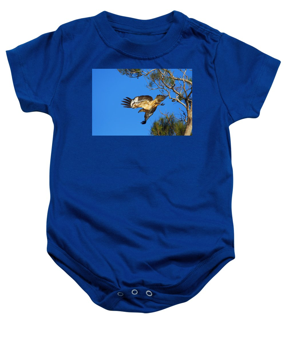 Wedge-tailed Eagle Baby Onesie featuring the photograph Wedge-tailed Eagle by Andrew McInnes