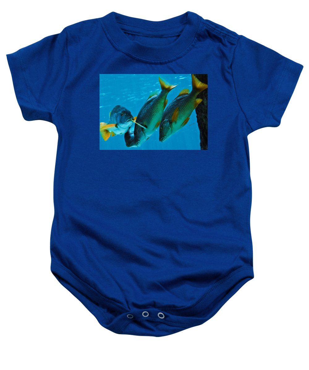 Fish Baby Onesie featuring the photograph Yo Yous Headin Da Wrong Way by DigiArt Diaries by Vicky B Fuller