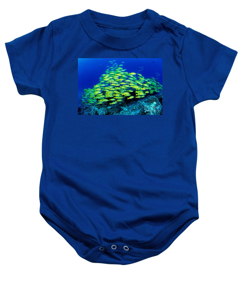 30-pfs0059 Baby Onesie featuring the photograph Bluestripe Snapper by Dave Fleetham - Printscapes