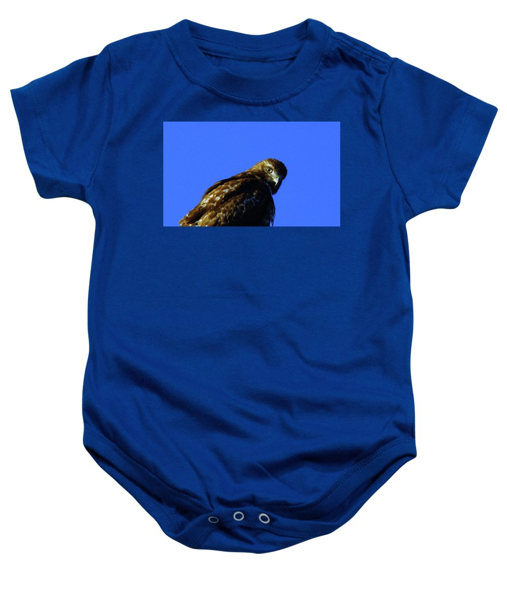 Hawks Baby Onesie featuring the photograph A Hawk Looking Back by Jeff Swan