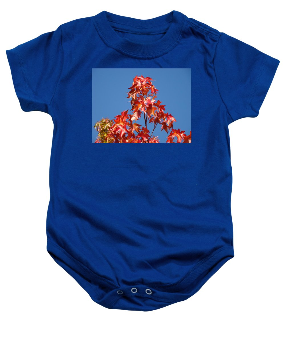 Tree Baby Onesie featuring the photograph Blue Sky Fall Tree Leaves Landscape Art Prints Baslee Troutman by Baslee Troutman