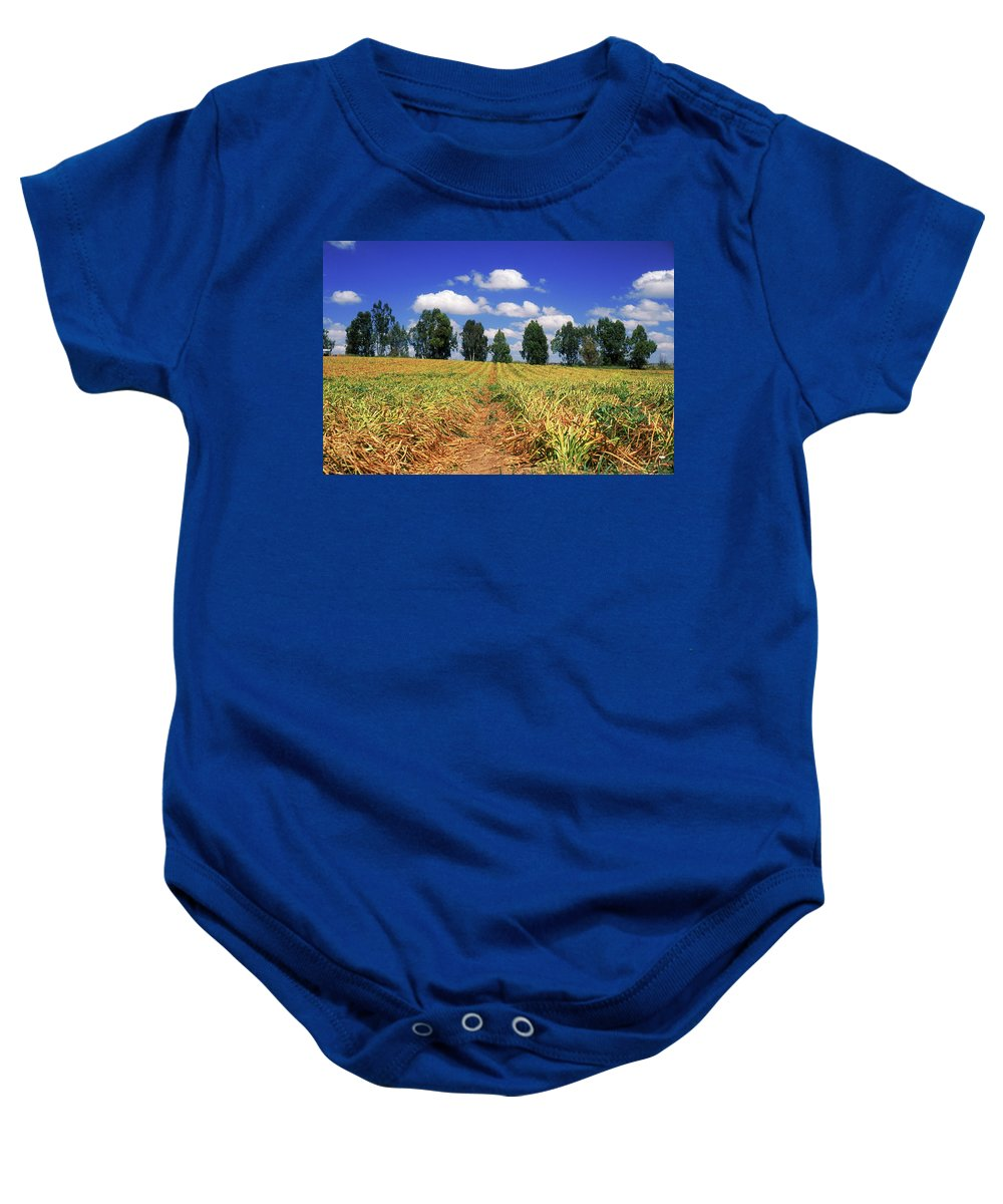 Impressionistic Baby Onesie featuring the photograph Fields Of Chopped Flowers At Nir Banim by Dubi Roman