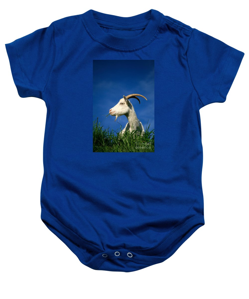 Animals Baby Onesie featuring the photograph Goat by Gaspar Avila
