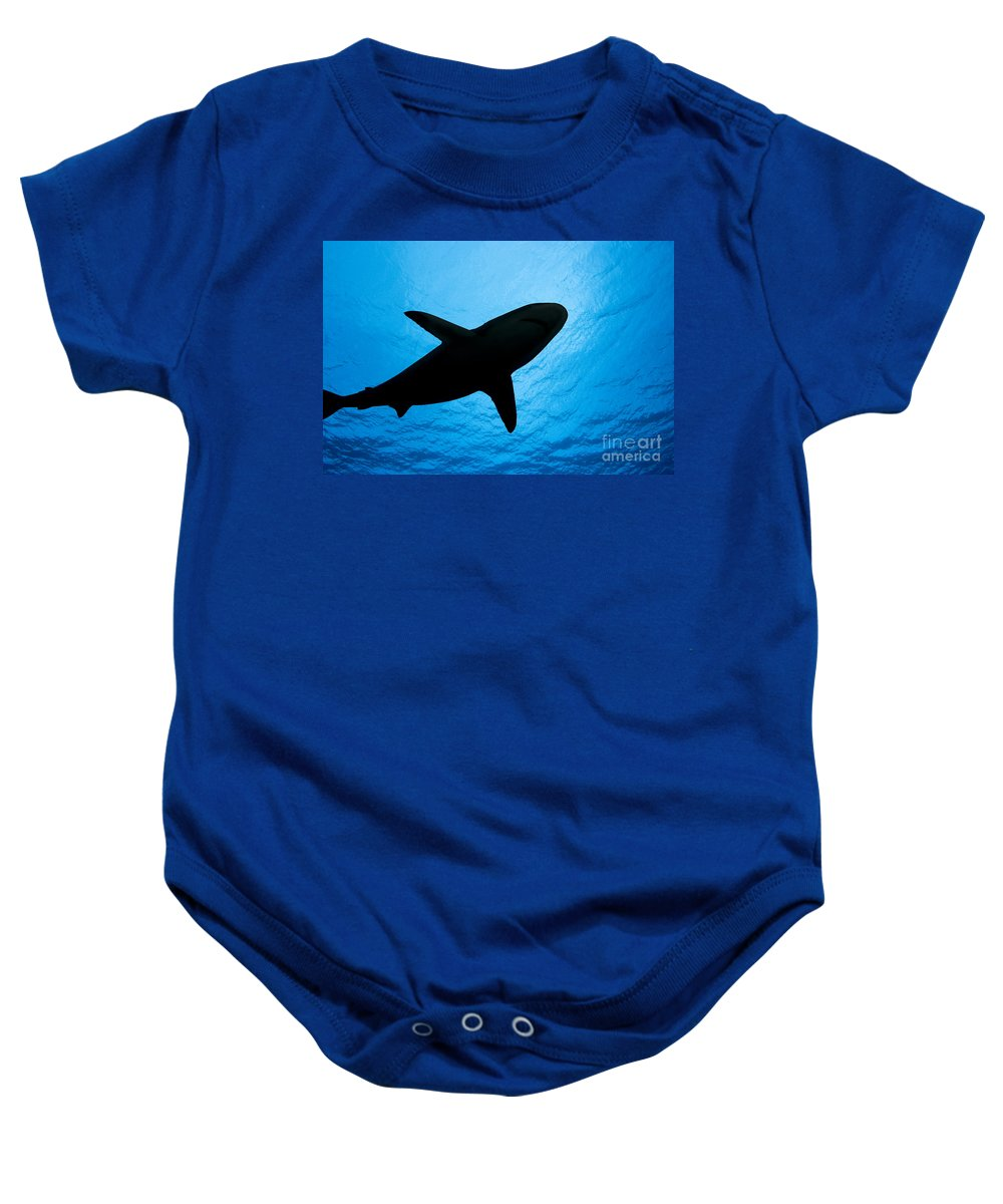 Amblyrhynchos Baby Onesie featuring the photograph Grey Reef Shark Silhouette by Dave Fleetham - Printscapes