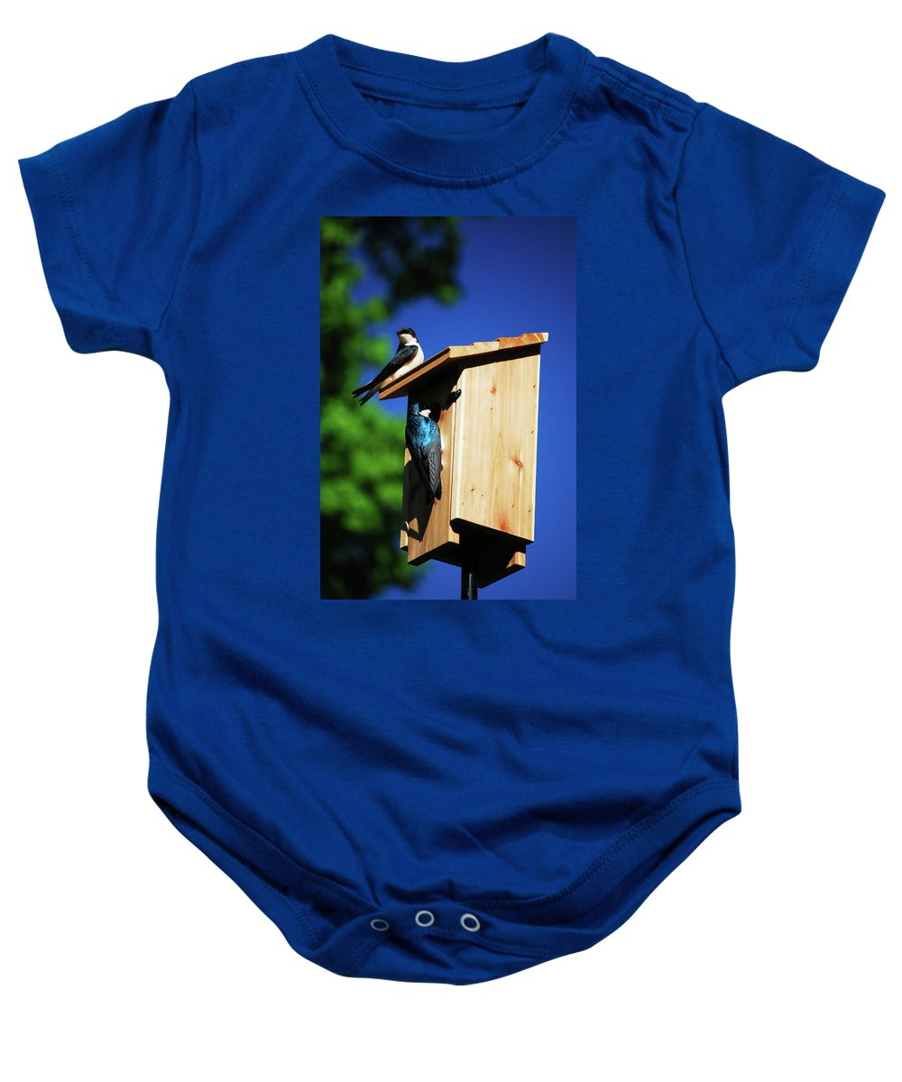 Tree Swallows Baby Onesie featuring the photograph New Home Inspection by Lori Tambakis