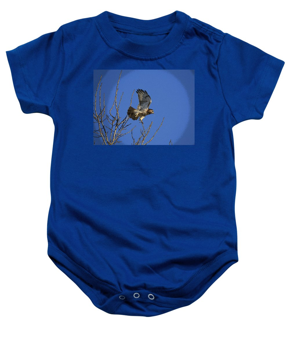 Hawk Baby Onesie featuring the photograph On The Move by Robert Pearson