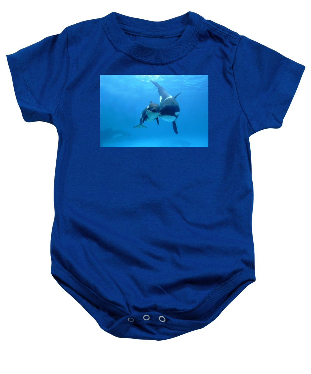 Mp Baby Onesie featuring the photograph Orca Mother And Newborn by Hiroya Minakuchi