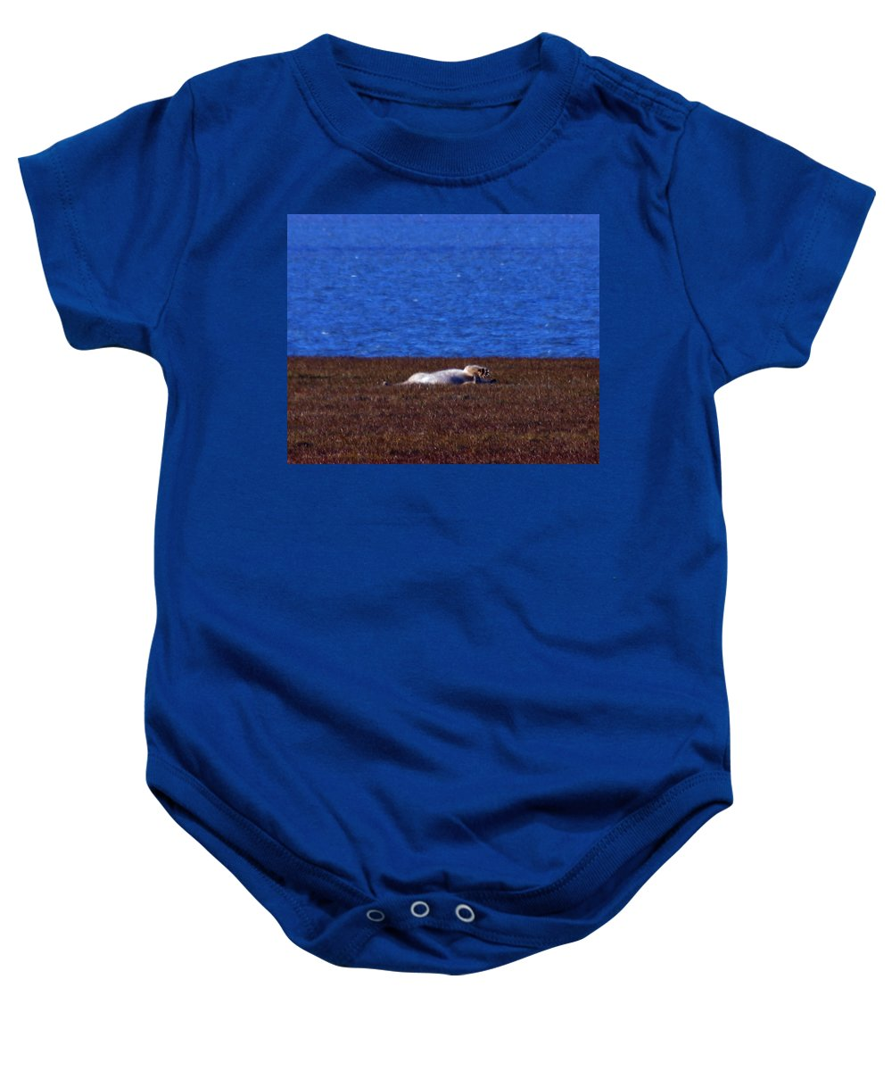 Polar Bear Baby Onesie featuring the photograph Polar Bear Rolling In Tundra Grass by Anthony Jones