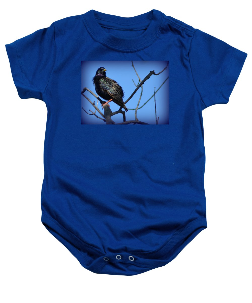 Starling Baby Onesie featuring the photograph Puffed Up Starling by Kathy Barney