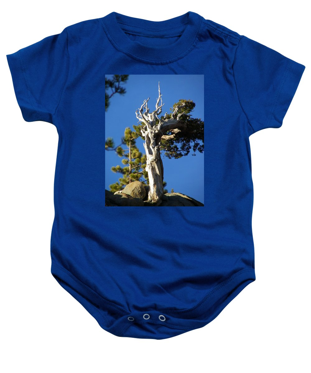 Tree Baby Onesie featuring the photograph Reaching Up by Charleen Treasures