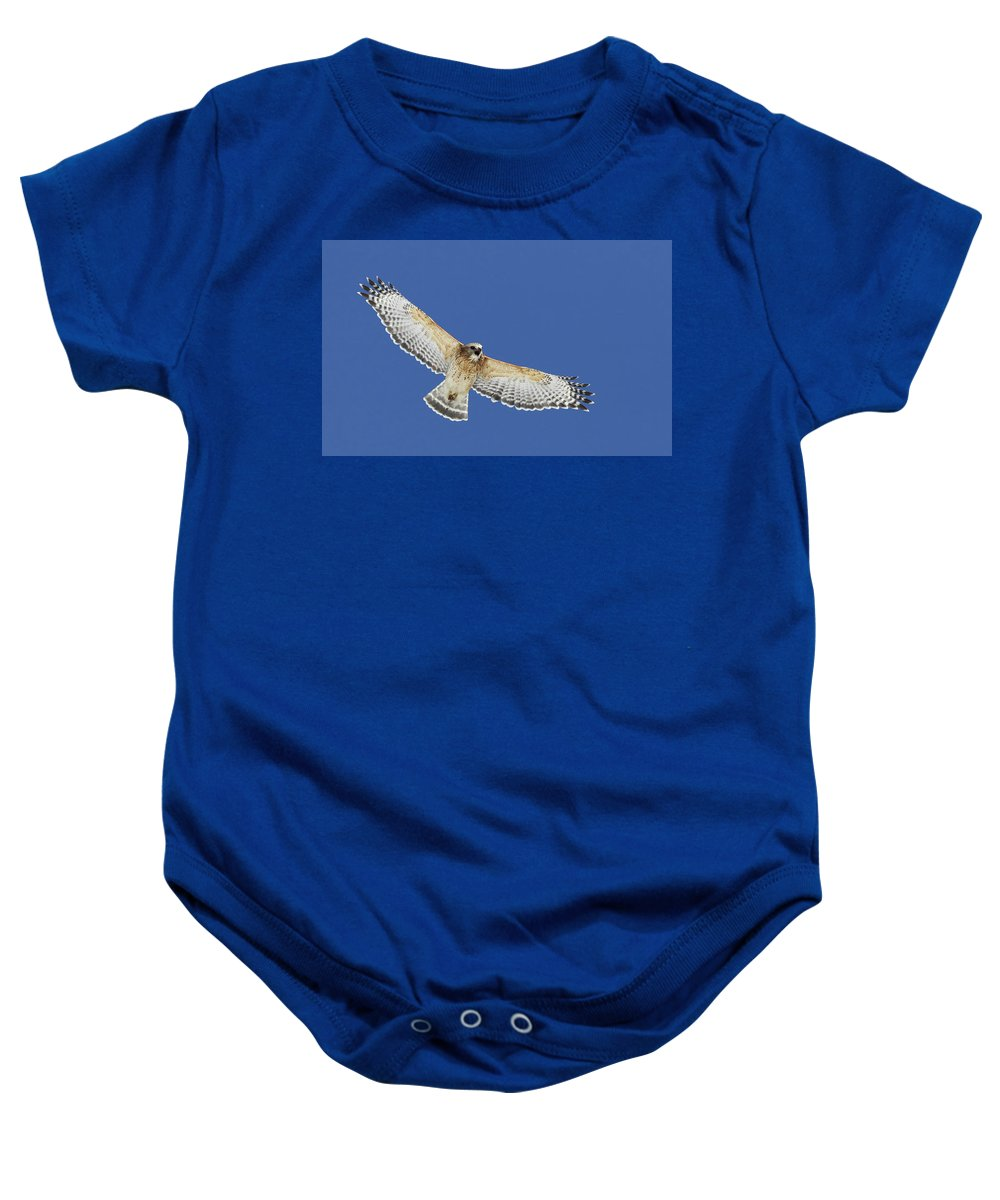 Animal Baby Onesie featuring the photograph Screaming Hawk by Mircea Costina Photography
