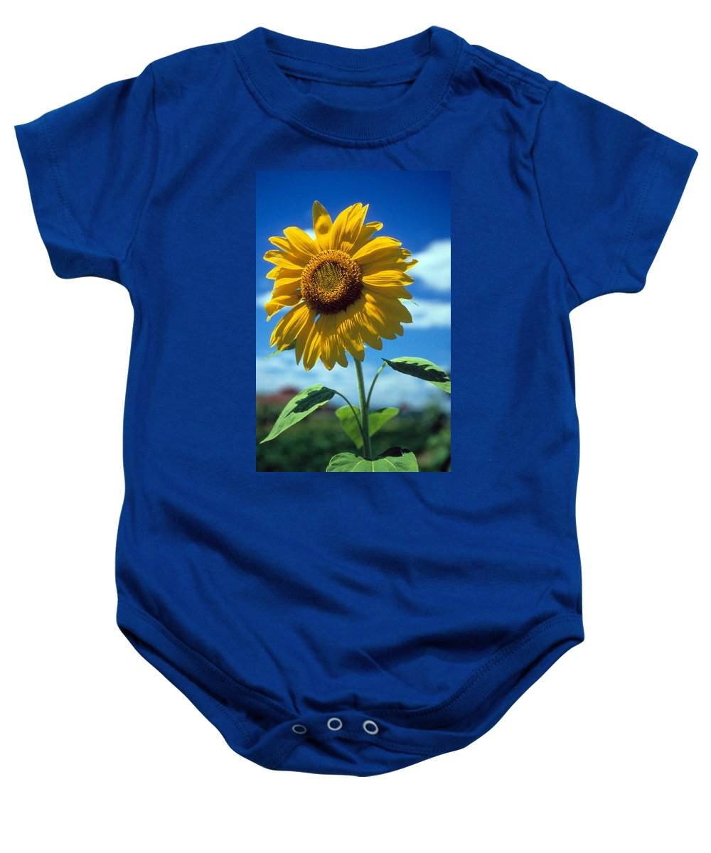 Sussex County Baby Onesie featuring the photograph Sussex County Sunflower by Laurie Paci