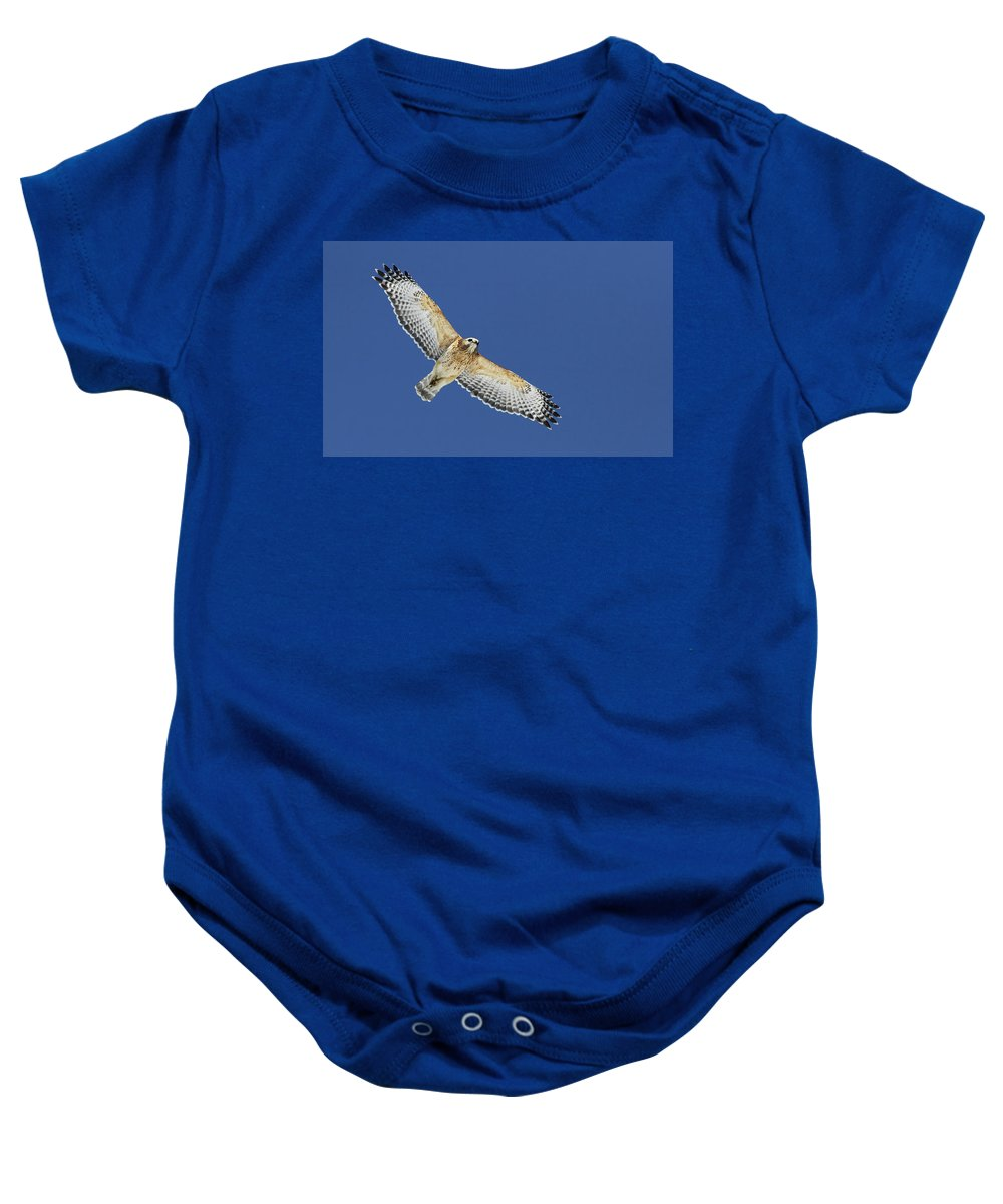Animal Baby Onesie featuring the photograph The Spirit Of The Hawk by Mircea Costina Photography