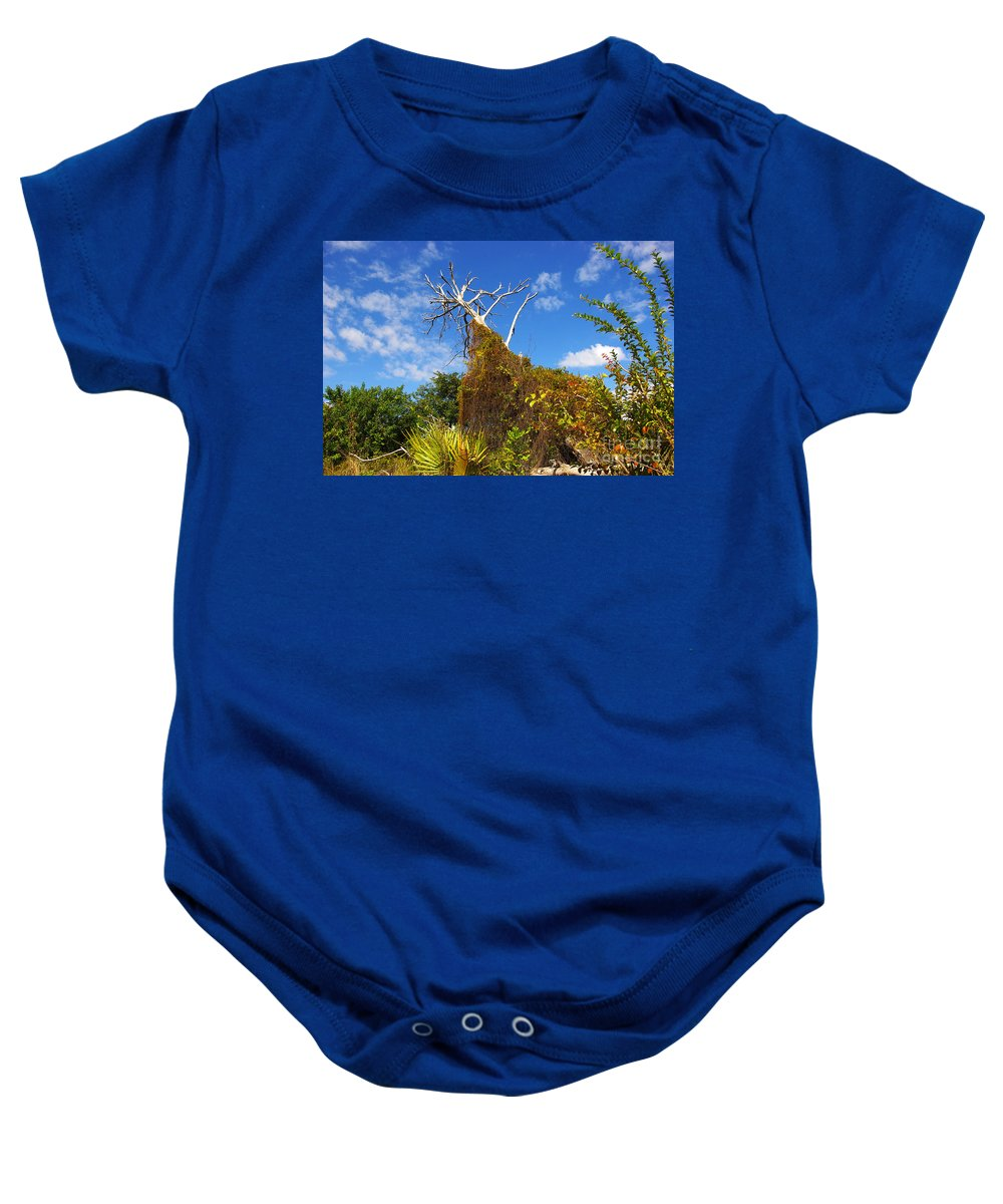 Baby Onesie featuring the photograph Tropical Plants In A Preserve In Florida by Zal Latzkovich