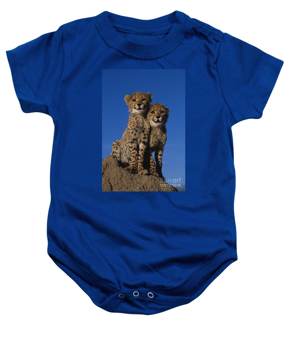 Animal Baby Onesie featuring the photograph Two Cheetah Cubs by Martin Harvey and Photo Researchers