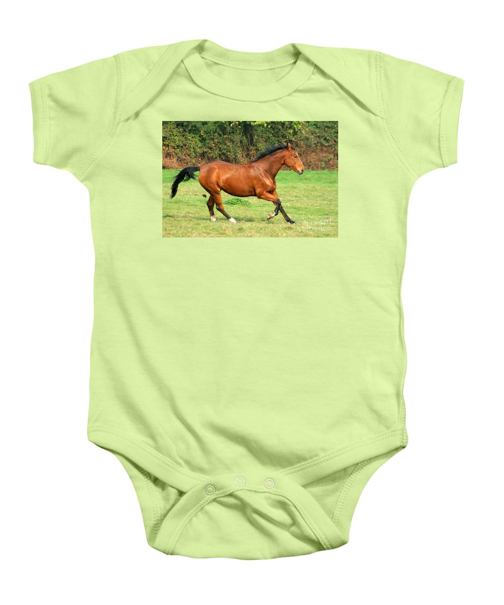 Horse Baby Onesie featuring the photograph The Bay Horse by Angel Ciesniarska
