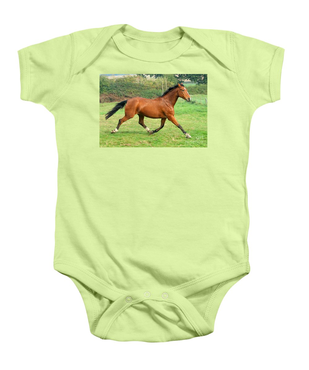 Grey Horse Baby Onesie featuring the photograph The Bay Horse by Angel Tarantella