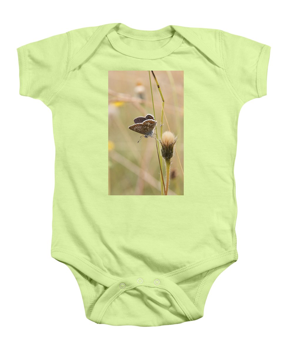Brown Argus Baby Onesie featuring the photograph A Brown Argus On Stem by Bob Kemp