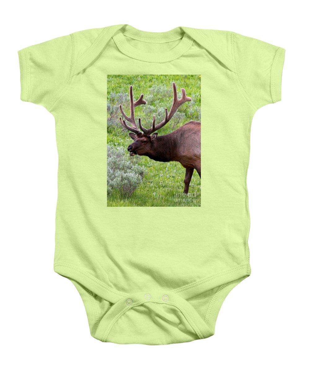 Elk Baby Onesie featuring the photograph Bull Elk In Yellowstone by Carol Groenen
