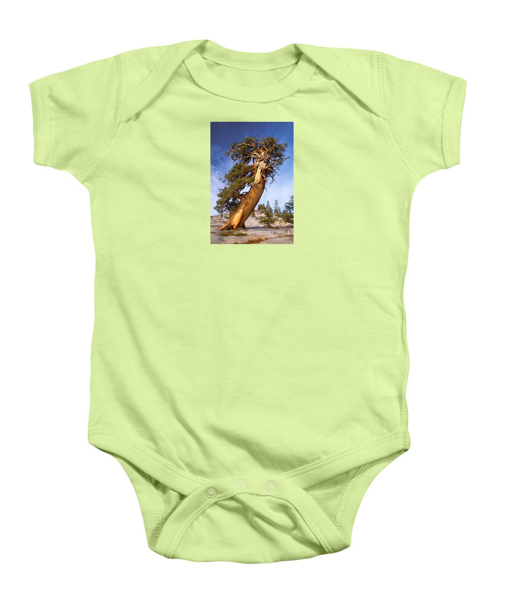 Tree Baby Onesie featuring the photograph Endurance by Alice Cahill