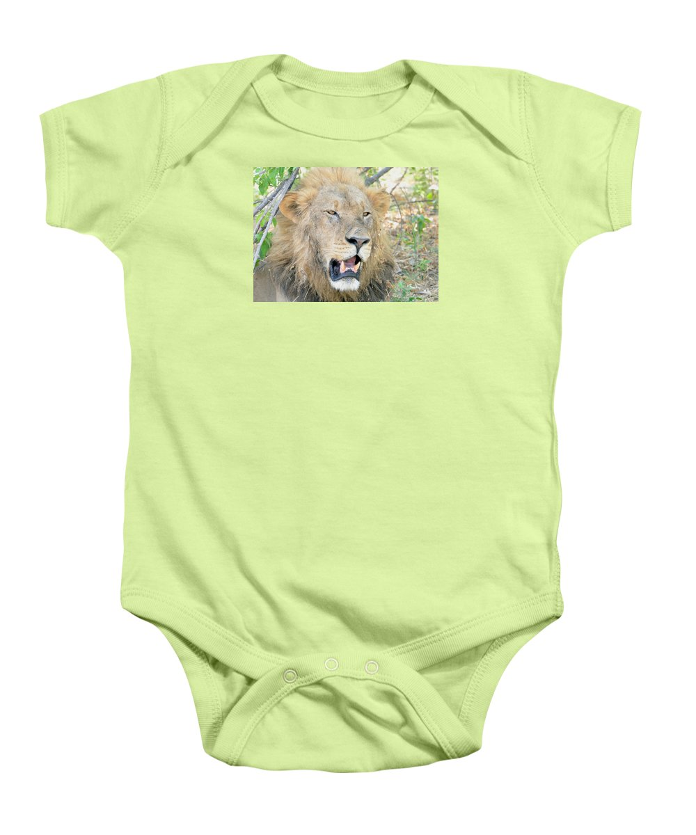 Botswana Baby Onesie featuring the photograph A Lion Talks by Tom Wurl