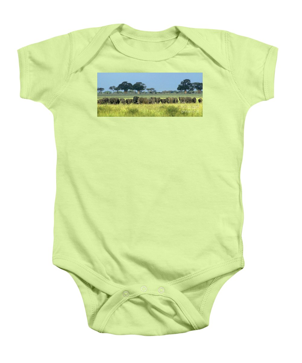Africa Baby Onesie featuring the photograph Panorama African Elephant Herd Endangered Species Tanzania by Dave Welling