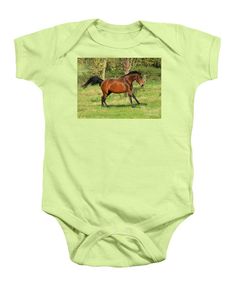 Horse Baby Onesie featuring the photograph Run Run by Angel Tarantella