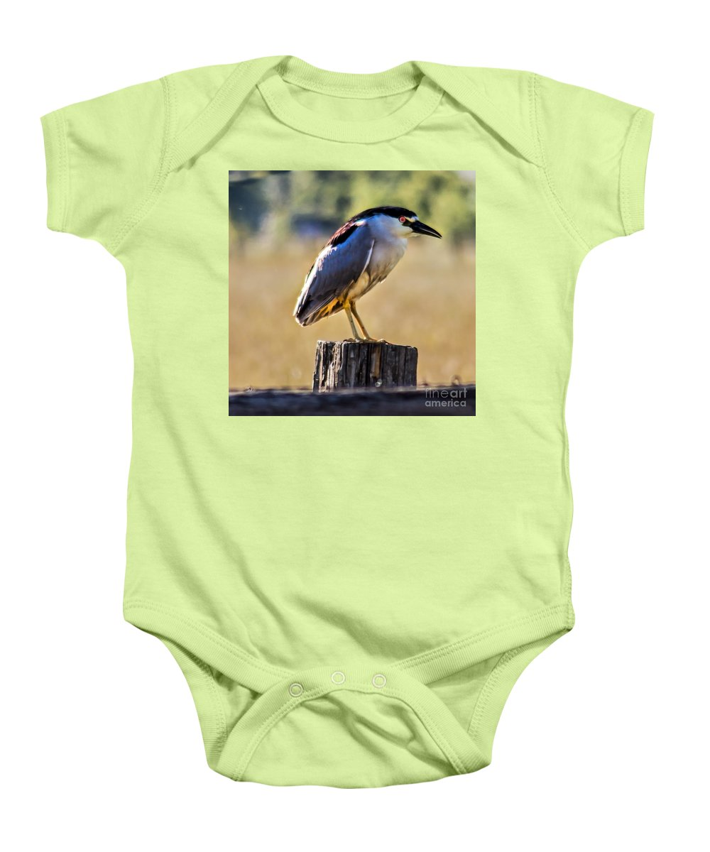 Birds Baby Onesie featuring the photograph Black-crowned Night Heron by Robert Bales