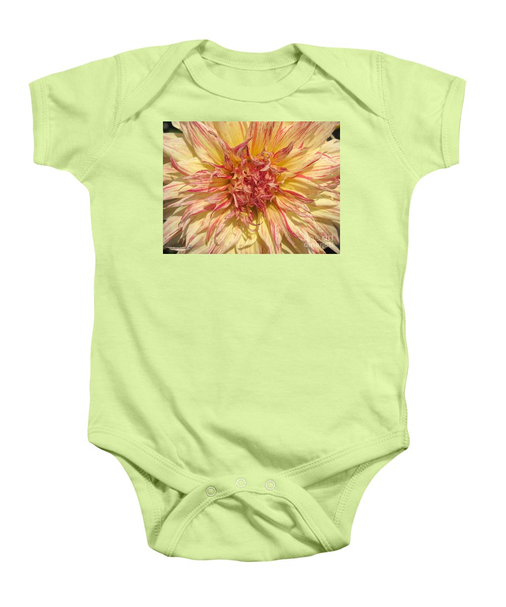 Dahlia Baby Onesie featuring the photograph Dahlia Named Misty Explosion by J McCombie