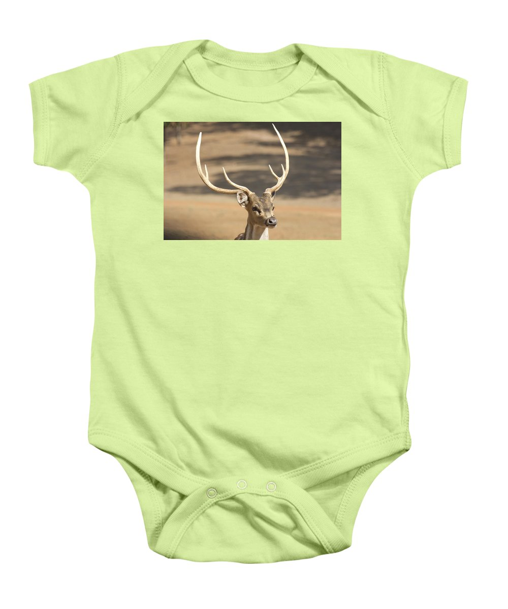 Deer Baby Onesie featuring the photograph Antlers by Douglas Barnard