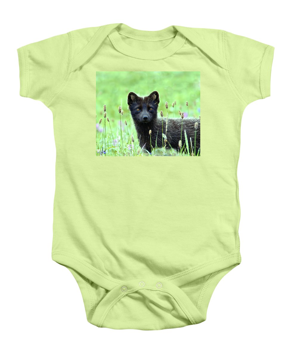 Arctic Fox Baby Onesie featuring the photograph Arctic Fox by Kenneth Blye
