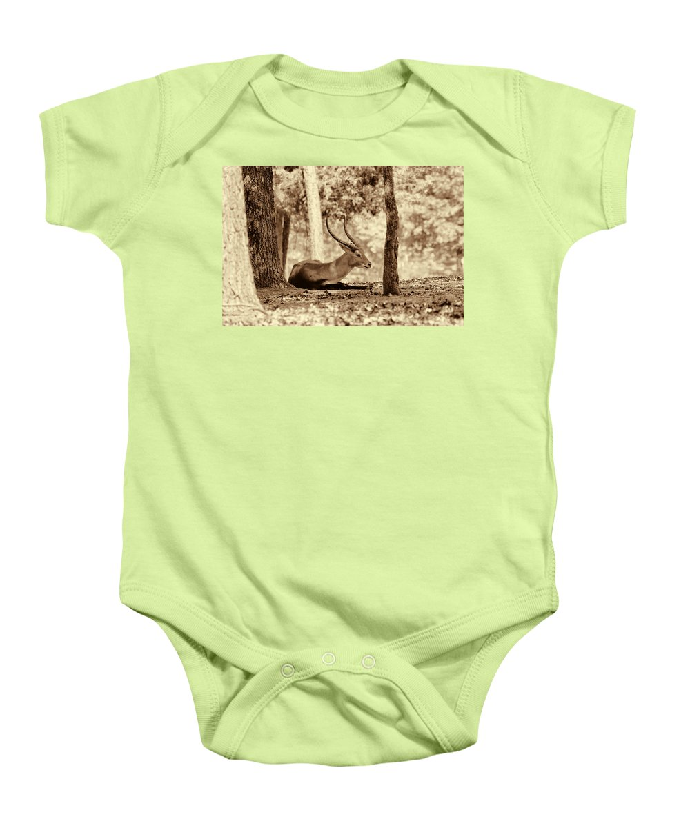 Antelope Baby Onesie featuring the photograph Napping by Douglas Barnard