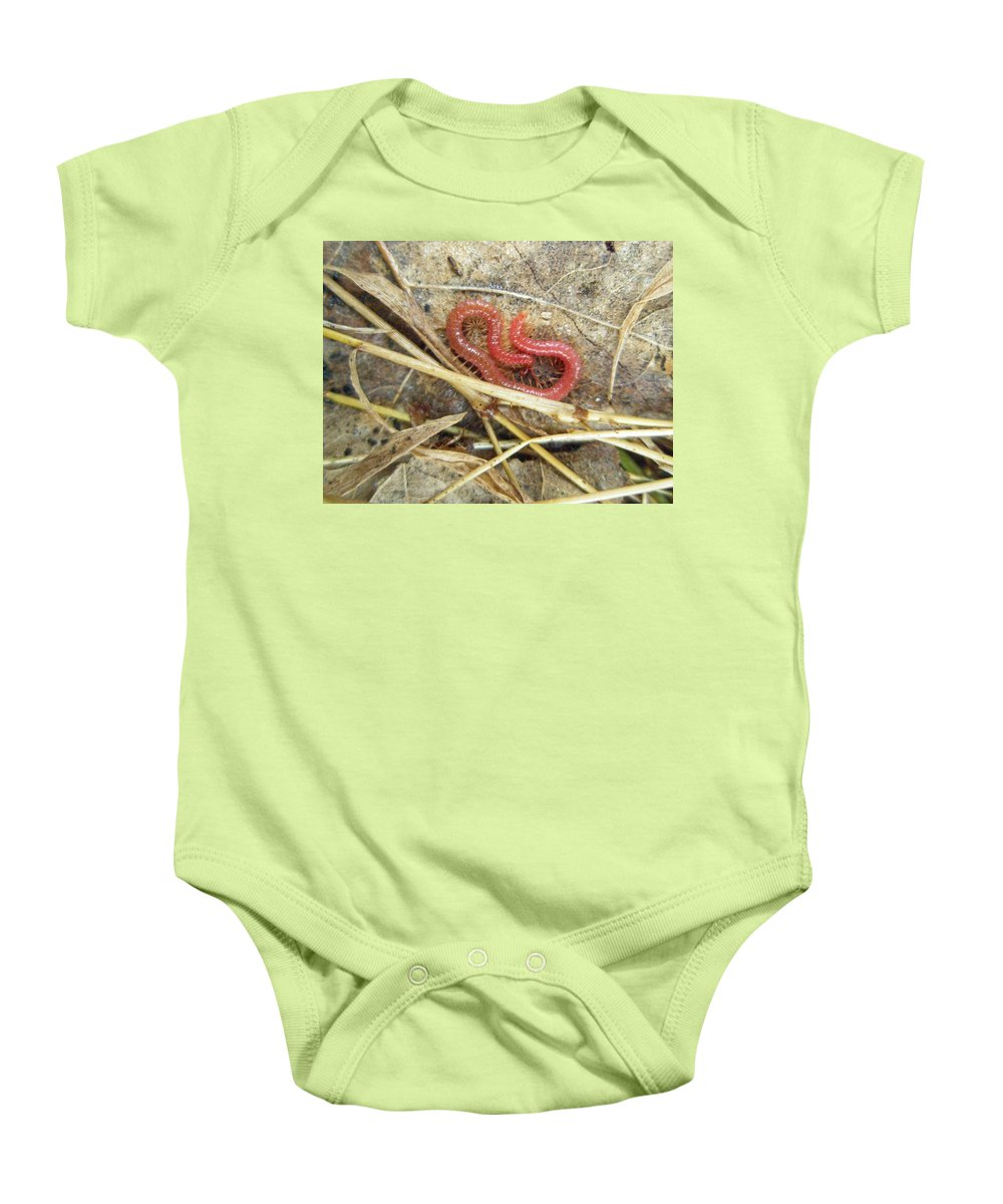Centipede Baby Onesie featuring the photograph Red Soil Centipede - Strigamia by Mother Nature